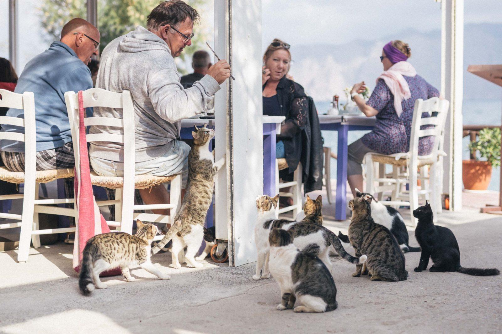 Turistid ja kassid